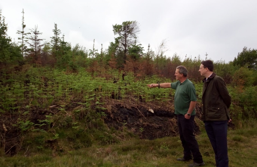 Ian showing Simon growth already occurring on the fire damaged areas